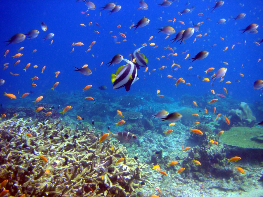 fish-coral-underwater-reef-and-fish
